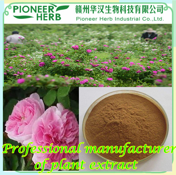 Rose extract Rose flavones Rose total flavones professional manufacturer