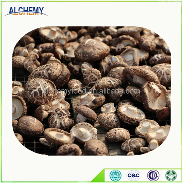 best price of dried mushroom with best quality