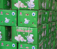 Great Quality china garlic price 2013 nice garlic