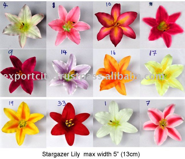 "flower head stargazer lily  lily casablanca  "" cm  buy, Beautiful flower"