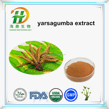 Cheap Price Bulk Yarsagumba Powder for sale , Cordyces Extract