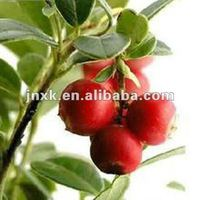 Anthocyanin- Cranberry Extract