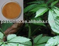 Gynostemma Entaphyllum Extract(high quality)