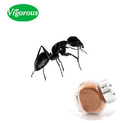 Pure Natural Black Ant Extract Powder