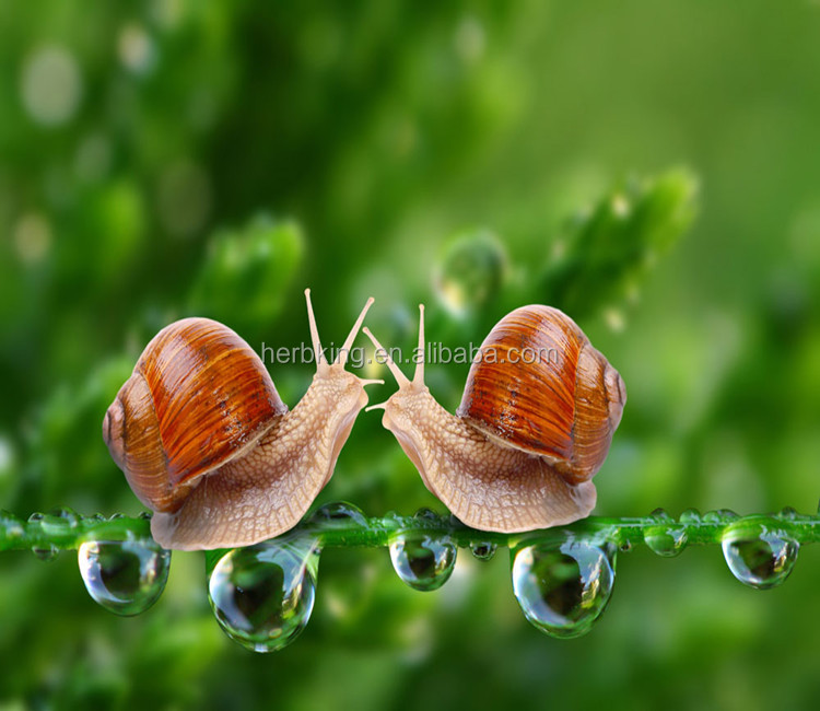 Supply pure animal protein snail extract /snail secretion liquid