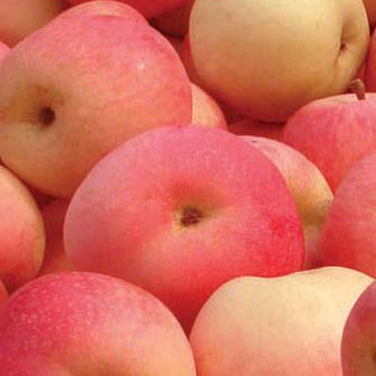 buying online in china 2015 hot sale fresh apples from south africa