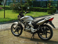 CLASSICAL HOT SALE TIGER 2000