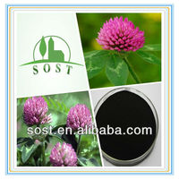 Plant Extract Herbal Powder Red Clover