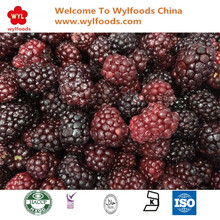 2017 Cheap Price IQF Frozen Blackberry