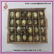 Taizhou lucky arts dove eggs for sale