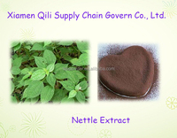 100% natural Herbal extract Nettle extract powder