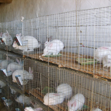 Galvanized rabbit cages for rabbit farm(20years factory ISO9001)