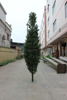 /product-detail/artificial-pine-tree-artificial-cedar-tree-artificial-pines-60307175785.html
