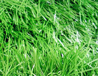 green grass /landscaping grass