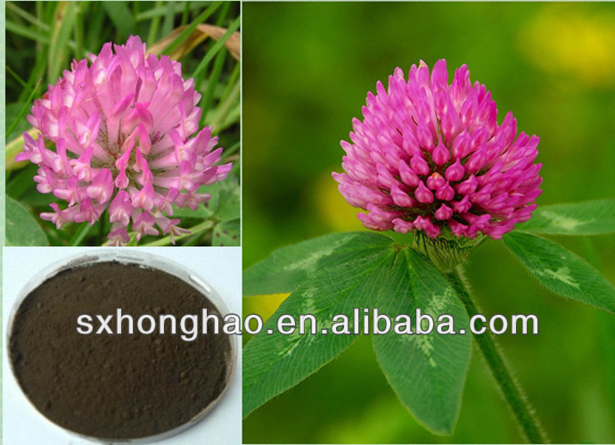 Herb Medicine Anti-Tumor Red Clover Extract