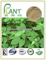 100% Pure stinging nettle plant extract