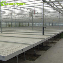 Greenhouse hydroponics used flood table/grow tray for seedlings