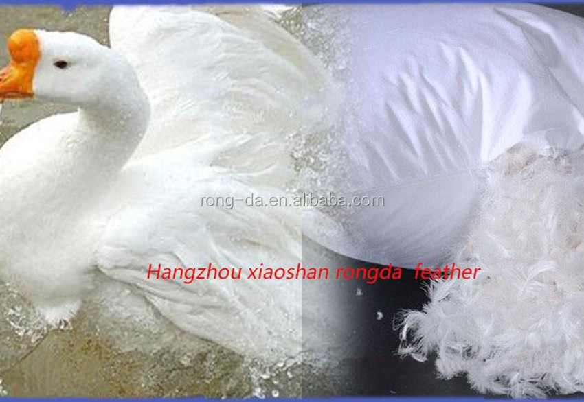 Best selling down goose feathers down for sale