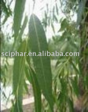 White Willow Extract(Salicin)