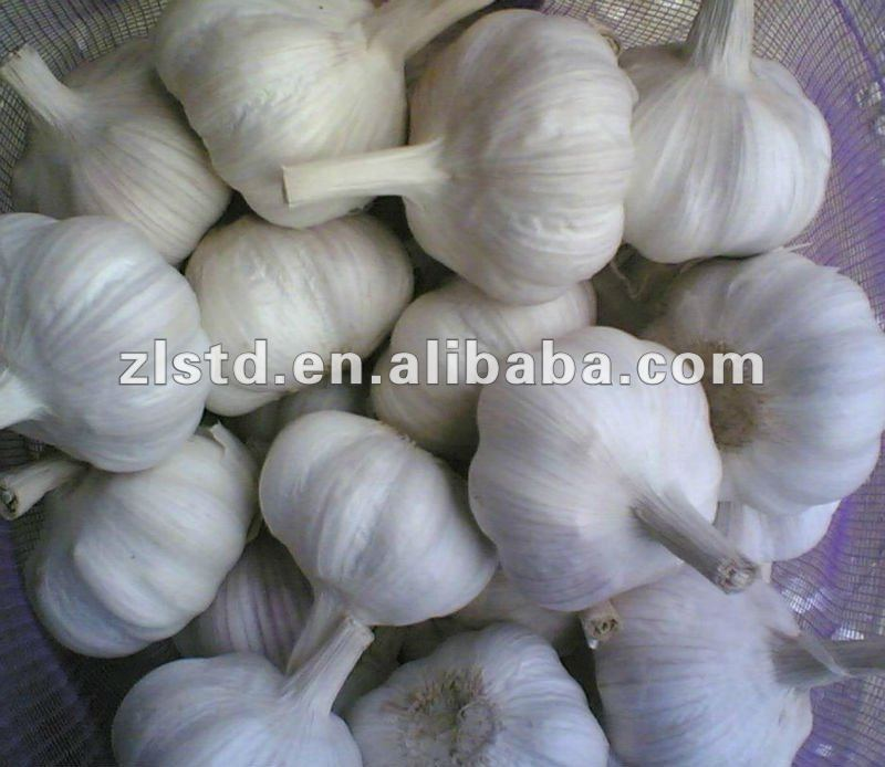 2016 new China fresh white garlic price