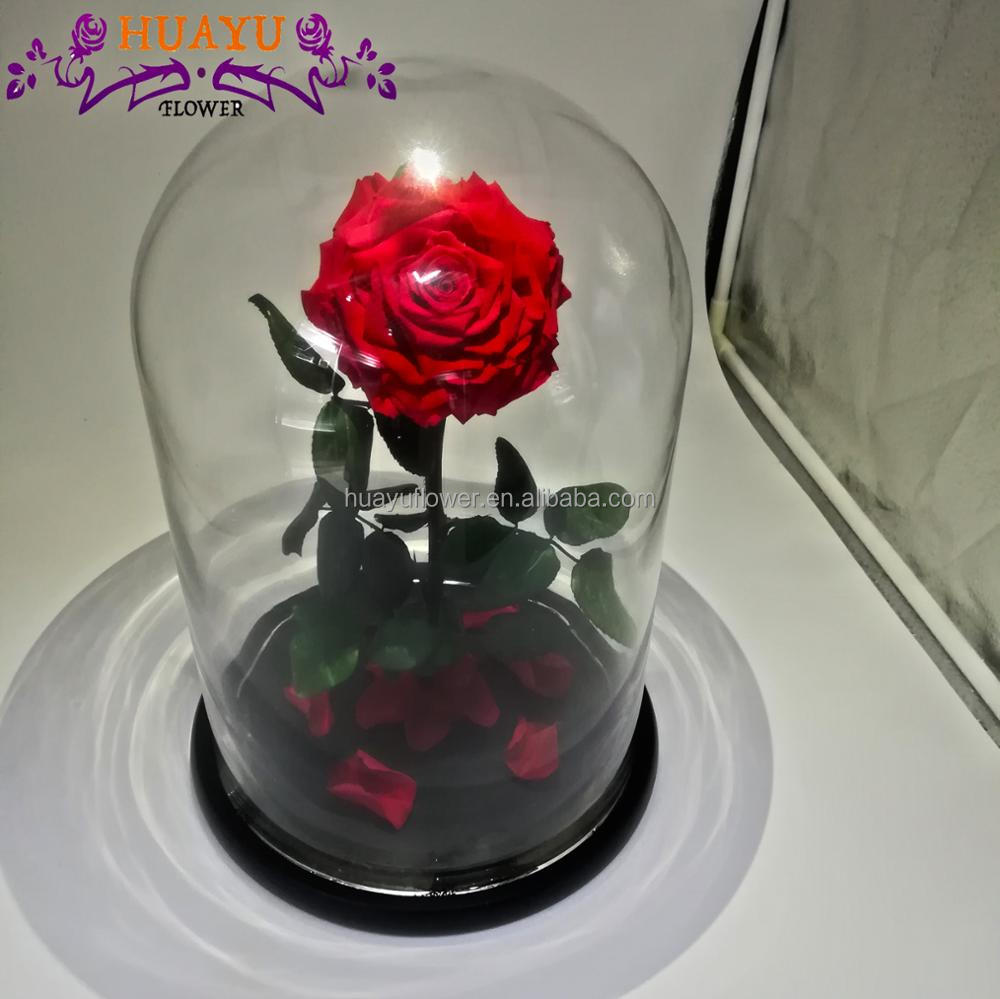 Beauty And The Beast Forever Rose Preserved Flower In Glass Dome As