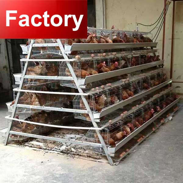 Full automatic broiler chicken battery cage system