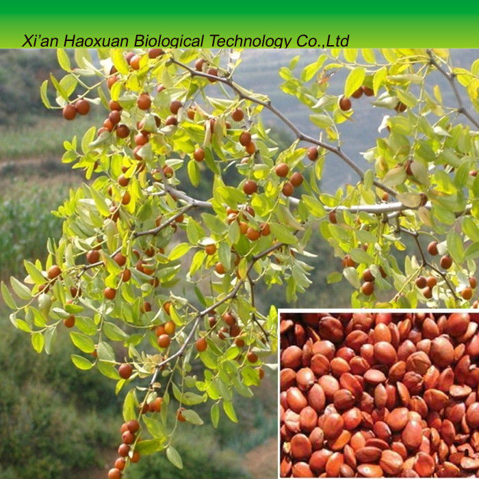 Wild Jujube Seed Extract powder for nature