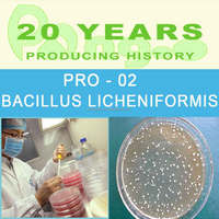 Bacillus licheniformis probiotic for poultry , pets and aquatic animals