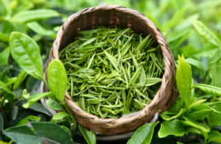 Natural CAMELLIA SINENSIS LEAF EXTRACT for Daily Products