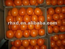 citrus fruit factory from China supply you best quality and price