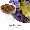 high orac value Grape seed extract 95% proanthocyanidins