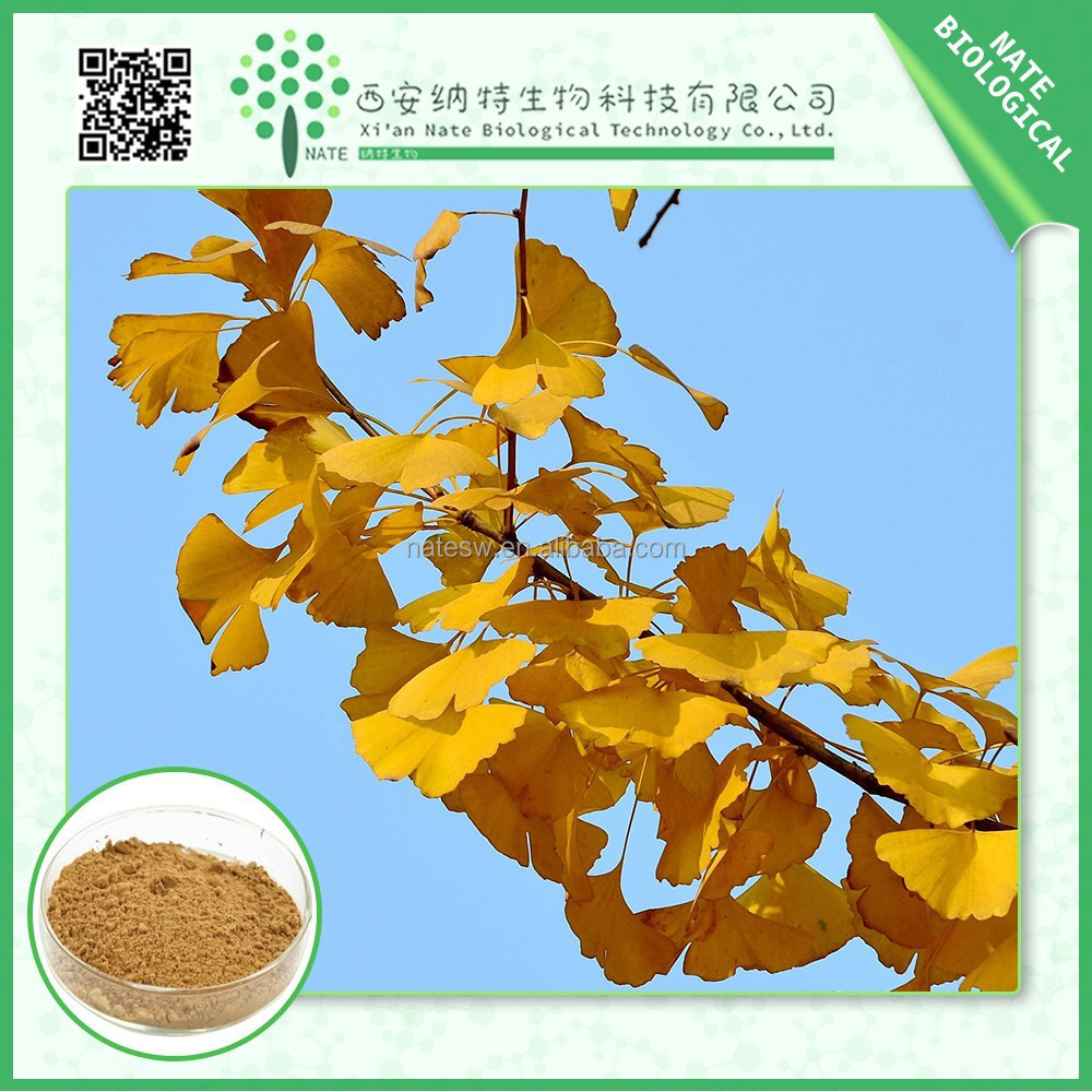 wholesale from China Health & Medical ginkgo biloba p.e