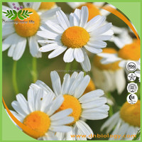 In stock Chamomile extract powder , Matricaria recutita extract,Chamomile Extract with nature Apigenin