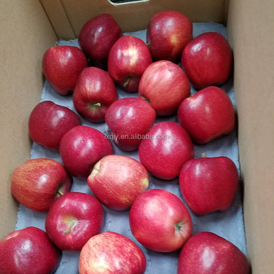 hot sale fresh fruit apple red apple gala apple from shanxi/tianshui/gansu