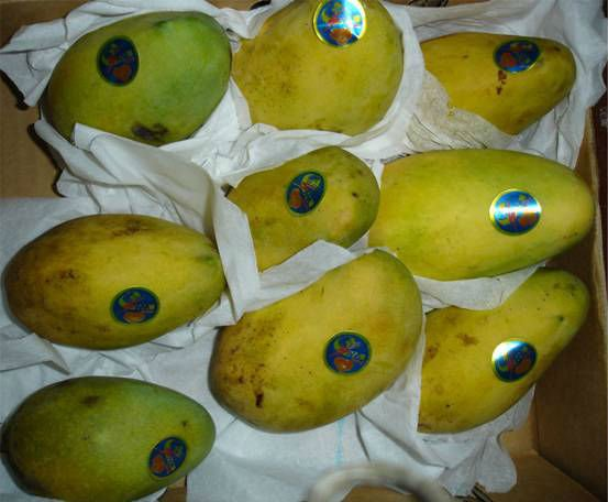 fresh egyptainmango