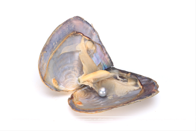 Hengsheng Grey 6-8mm Near Round Pearl Oyster Akoya Shell Freshwater for Jewellery Making
