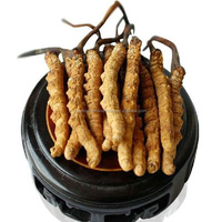 anti cancer organic cordyceps extract for human health
