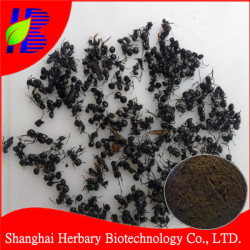 Pure black ant extract powder for erectile dysfunction