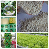 /product-detail/hydroponics-expanded-perlite-for-rooting-cuttings-soil-drainage-carnivorous-plants-60544040701.html