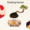 China Manufacture handmade floating bonsai tree in the air