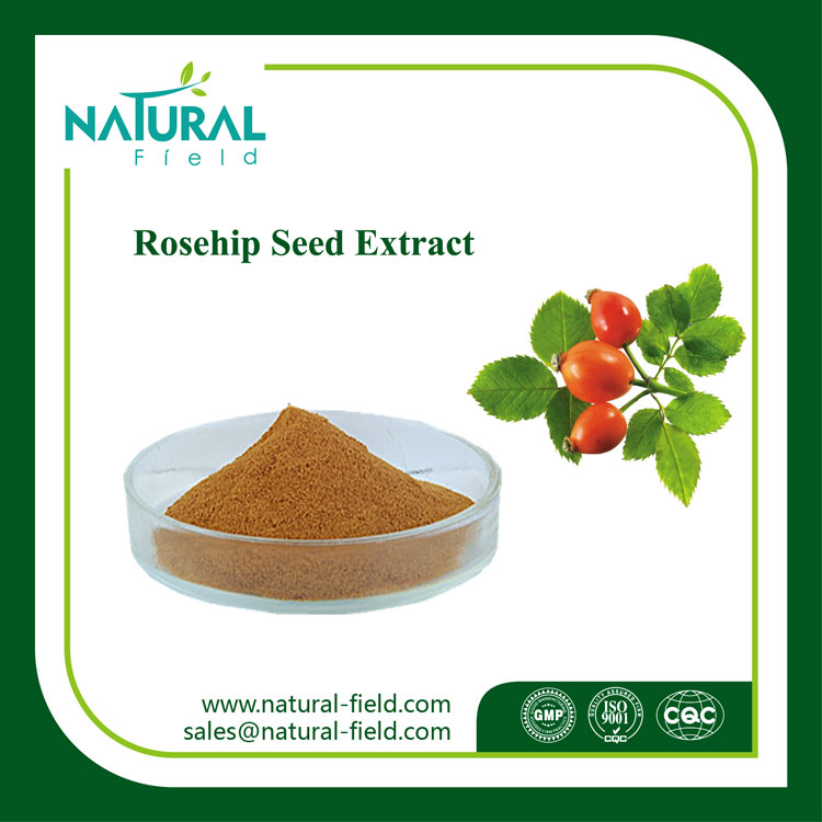 Factory Price Anti-Aging Rose Hip Extract, Anti-Fatigue Rosehip Extract Powder