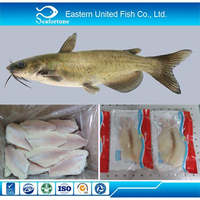 Top quality and good price Frozen Channel Catfish Fillet