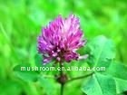Red Clover Extract; Isoflavones;plant extract