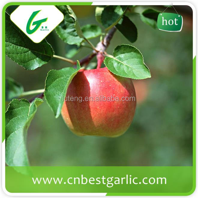 Red fresh fuji apple with best price