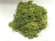 Factory supply salted tosaka seaweed nori