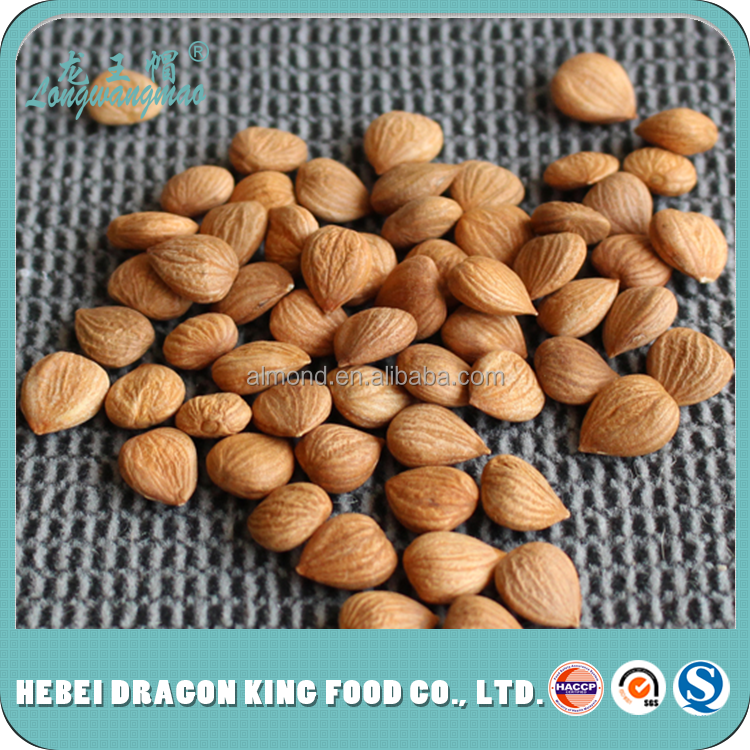 Zhangjiakou factory supply bitter raw apricot seeds kernels which quality better than apricot kernel turkey
