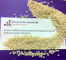 Sudanese Whitish Sesame seeds