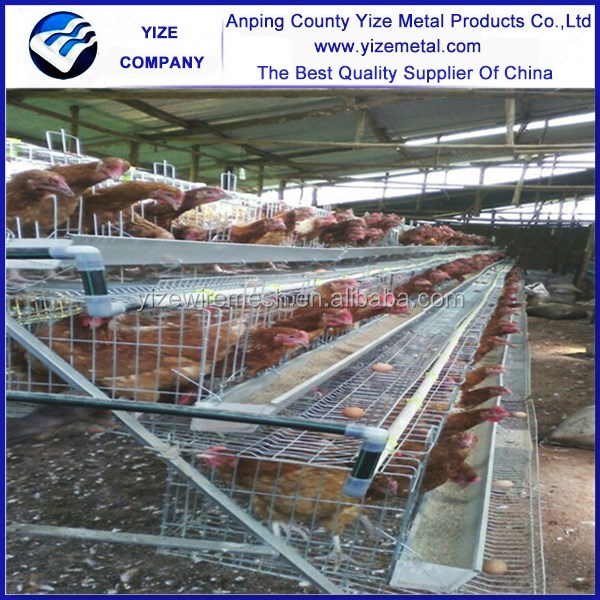 made in china equipments for poultry farms/chicken cage quail cage design pigeon coop