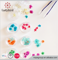 12 Colors Real Dry Dried Flower Nail Art Tips Decoration DIY