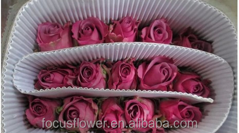 Wholesale ecuadorian roses fresh cut flowers for home decoration